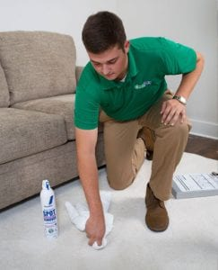 Carpet Stain Removal Experts